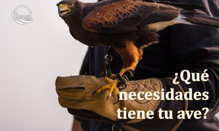 ¿Qué necesidades tiene tu ave?