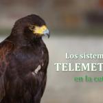 Los sistemas de telemetría en la cetrería
