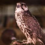 Cómo lograr un mantenimiento óptimo del plumaje de tu ave