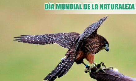 Celebra el día Mundial de la Naturaleza con Cetrería Web