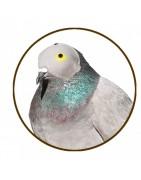 Capuchones para palomas   Cetrería Web ®